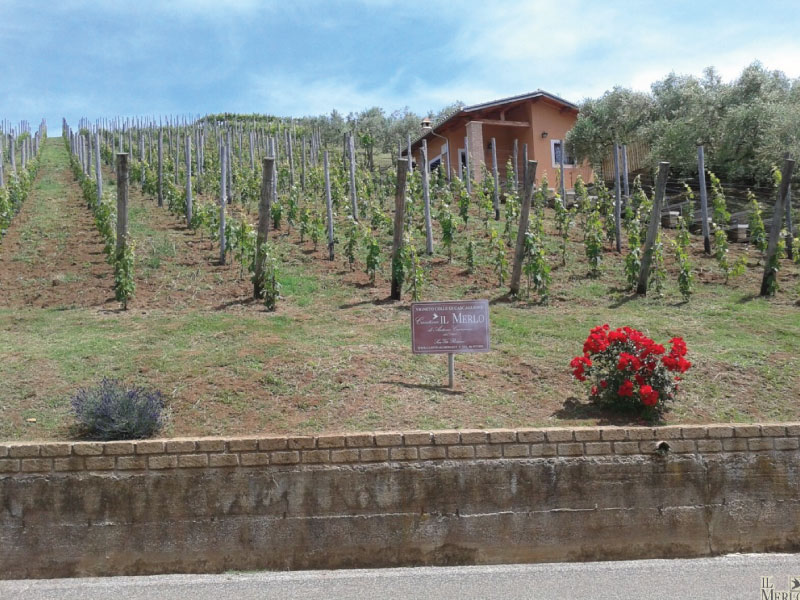http://www.vinointorno.it/immagini_immobili/01-06-2017/1496302564-400-.jpg