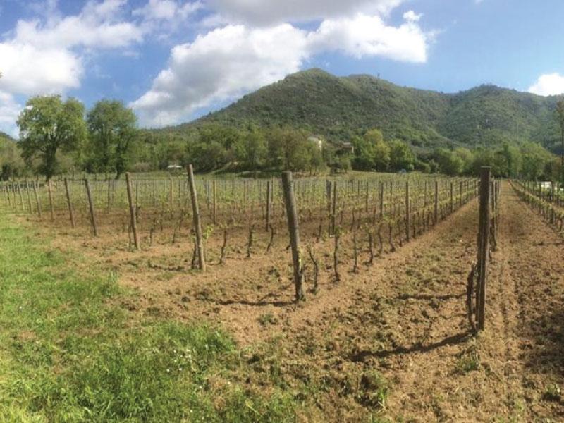 http://www.vinointorno.it/immagini_immobili/01-06-2017/1496307439-445-.jpg