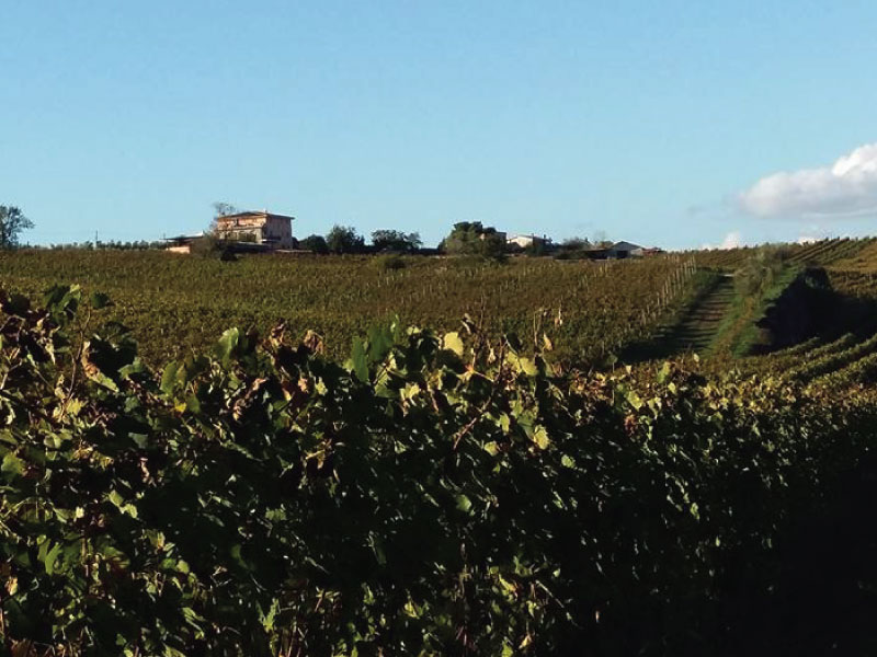 http://www.vinointorno.it/immagini_immobili/01-06-2017/1496313811-94-.jpg