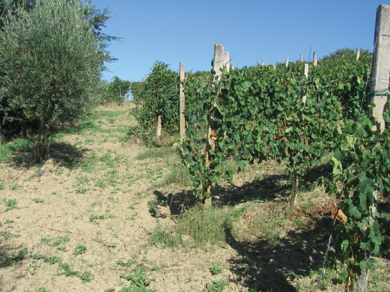 https://www.vinointorno.it/immagini_immobili/06-06-2017/1496739023-280-.jpg