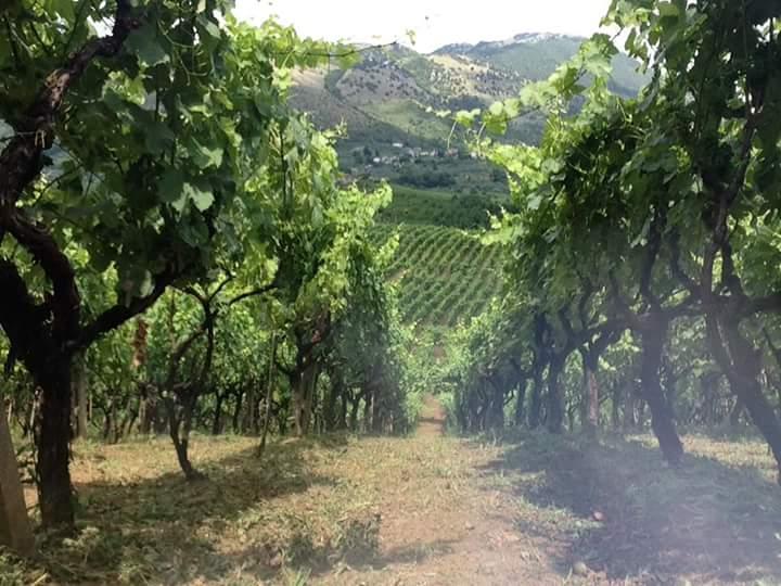 https://www.vinointorno.it/immagini_immobili/07-06-2017/1496821732-463-.jpg