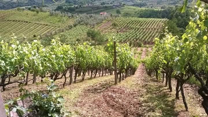 https://www.vinointorno.it/immagini_immobili/07-06-2017/1496821734-109-.jpg