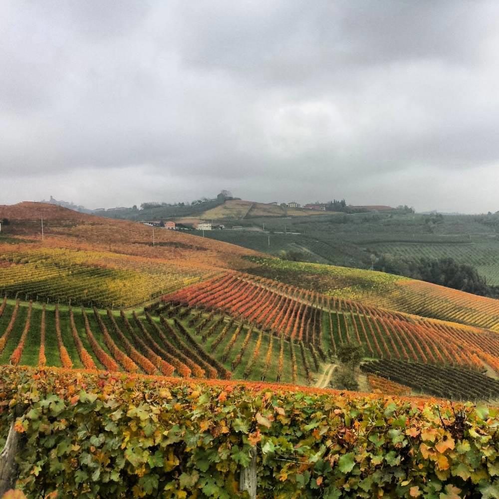 https://www.vinointorno.it/immagini_immobili/12-05-2017/1494601629-309-.jpg
