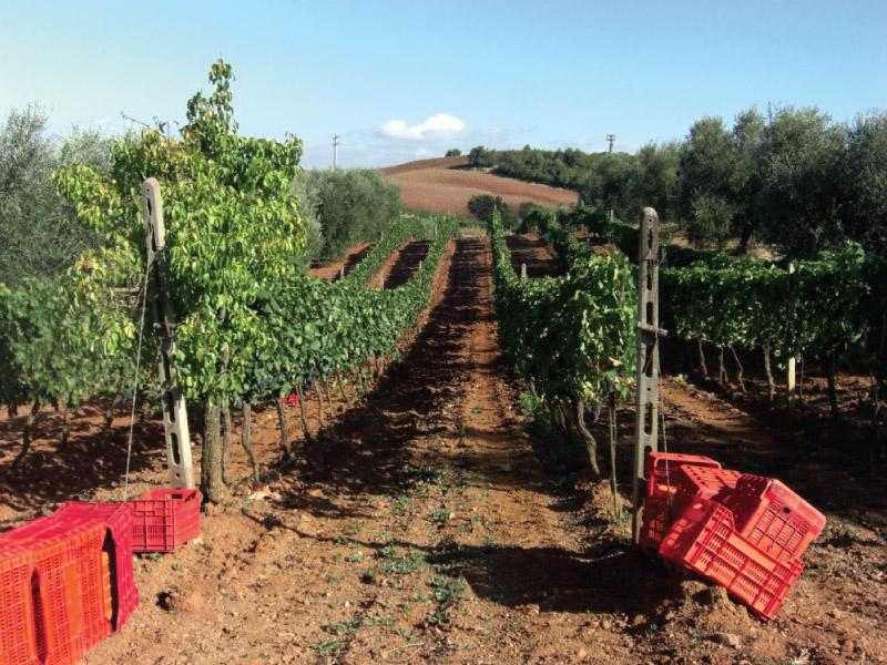 https://www.vinointorno.it/immagini_immobili/13-06-2017/1497365611-81-.jpg