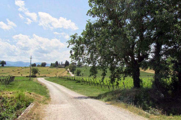 https://www.vinointorno.it/immagini_immobili/13-06-2018/1528880945-262-.jpg