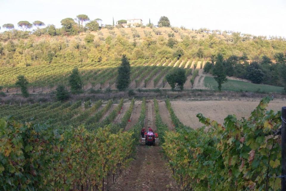 http://www.vinointorno.it/immagini_immobili/16-05-2017/1494948927-1-.jpg