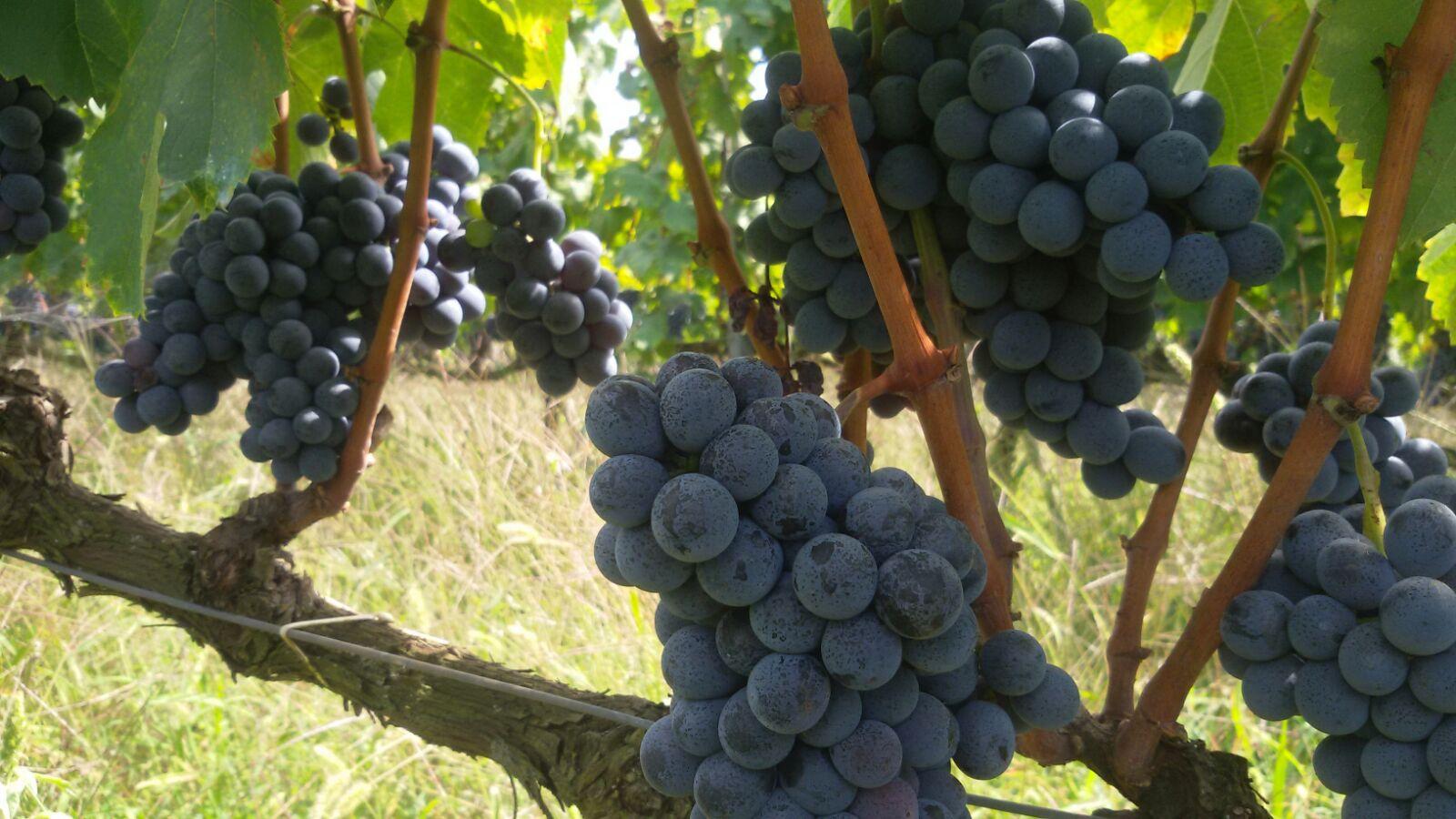 http://www.vinointorno.it/immagini_immobili/16-05-2017/1494952093-223-.jpg