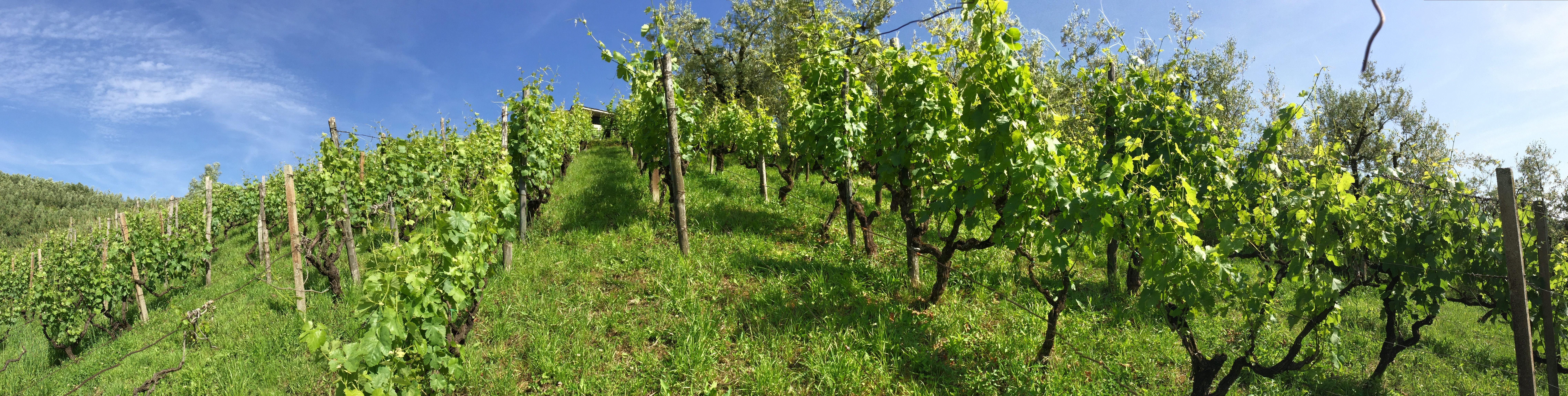 http://www.vinointorno.it/immagini_immobili/16-05-2017/1494952161-124-.jpg