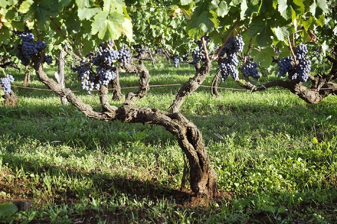https://www.vinointorno.it/immagini_immobili/16-05-2017/1494955426-482-.jpg