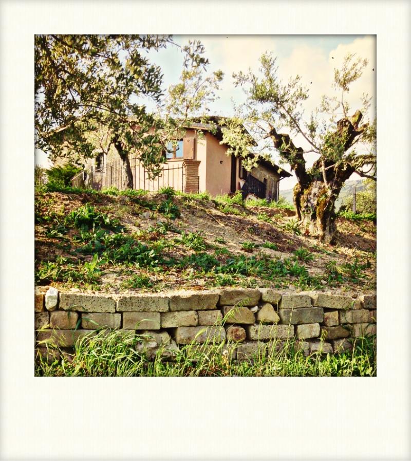 http://www.vinointorno.it/immagini_immobili/17-05-2017/1495007196-25-.jpg