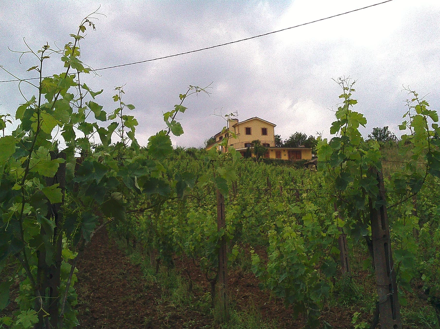 http://www.vinointorno.it/immagini_immobili/17-05-2017/1495010906-32-.png
