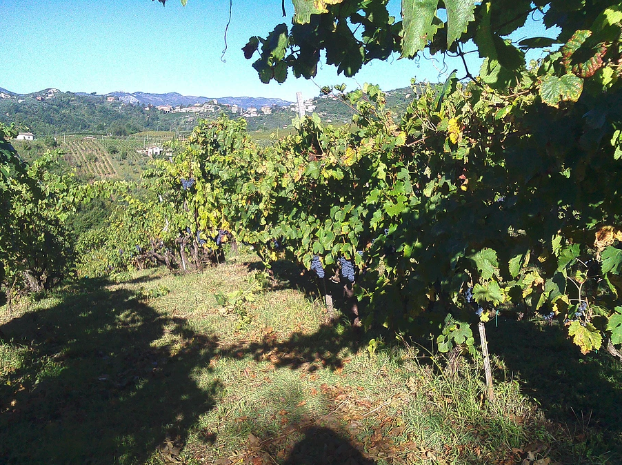 http://www.vinointorno.it/immagini_immobili/17-05-2017/1495010951-92-.png