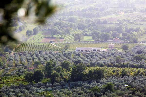 http://www.vinointorno.it/immagini_immobili/17-05-2017/1495012644-41-.jpg