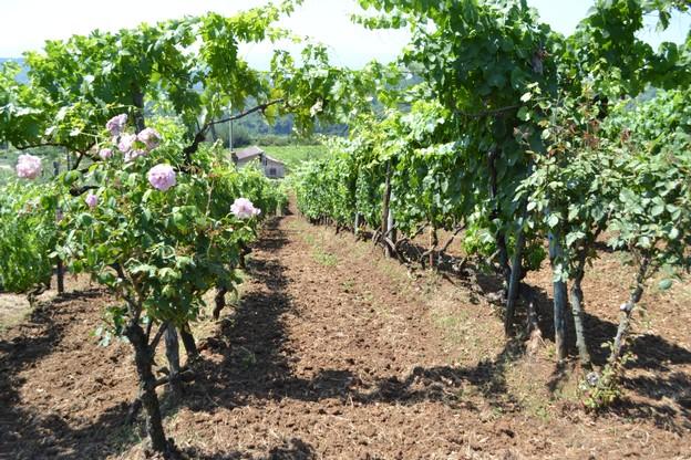 http://www.vinointorno.it/immagini_immobili/17-05-2017/1495017847-324-.jpg