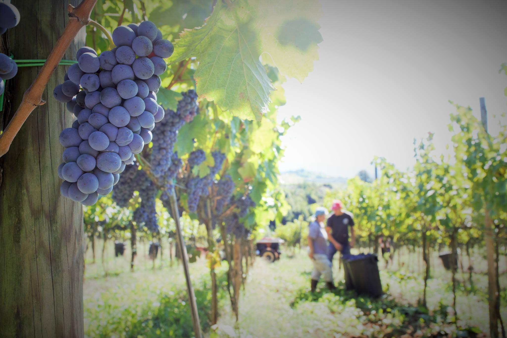 http://www.vinointorno.it/immagini_immobili/18-05-2017/1495123592-347-.jpg