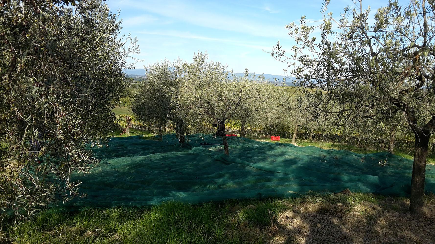 http://www.vinointorno.it/immagini_immobili/19-05-2017/1495213349-351-.jpg