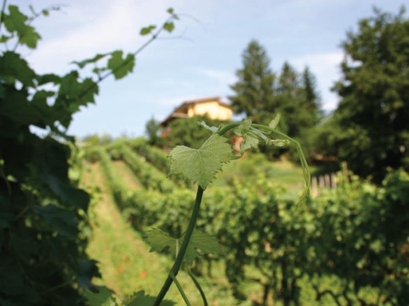 http://www.vinointorno.it/immagini_immobili/31-05-2017/1496225875-109-.jpg