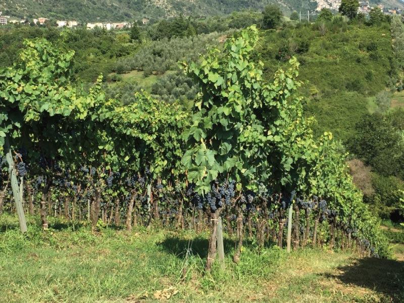 http://www.vinointorno.it/immagini_immobili/31-05-2017/1496225878-160-.jpg