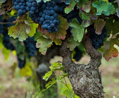https://www.vinointorno.it/resizer/resize.php?url=https://www.vinointorno.it/immagini_immobili/04-06-2018/1528105866-471-.jpg&size=400x330c
