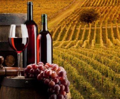 https://www.vinointorno.it/resizer/resize.php?url=https://www.vinointorno.it/immagini_immobili/24-05-2017/1495638289-66-.jpg&size=400x330c