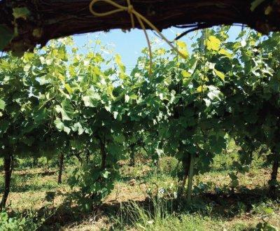 https://www.vinointorno.it/site/resizer/resize.php?url=https://www.vinointorno.it/immagini_immobili/07-06-2017/1496821710-363-.jpg&size=400x330c