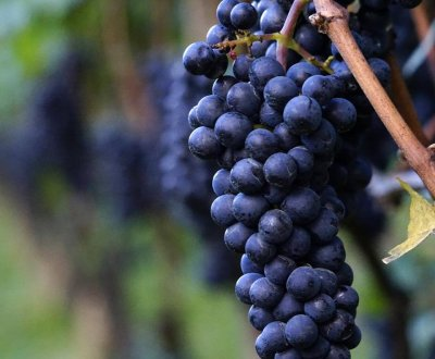 https://www.vinointorno.it/site/resizer/resize.php?url=https://www.vinointorno.it/immagini_immobili/12-06-2018/1528818884-184-.jpg&size=400x330c