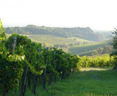 https://www.vinointorno.it/site/resizer/resize.php?url=https://www.vinointorno.it/immagini_immobili/13-06-2018/1528877637-145-.jpg&size=400x330c