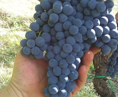 https://www.vinointorno.it/site/resizer/resize.php?url=https://www.vinointorno.it/immagini_immobili/22-05-2017/1495470323-148-.jpg&size=400x330c