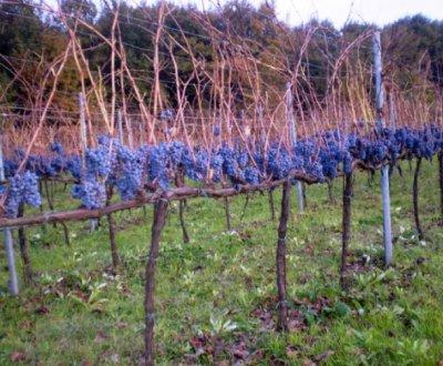https://www.vinointorno.it/site/resizer/resize.php?url=https://www.vinointorno.it/immagini_immobili/22-05-2017/1495472397-198-.jpg&size=400x330c