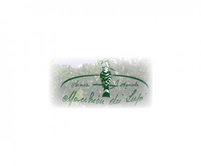 https://www.vinointorno.it/site/resizer/resize.php?url=https://www.vinointorno.it/immagini_immobili/31-05-2017/1496218858-348-.jpg&size=400x330c